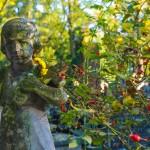 Cmentarz-Lipowa-Lublin-Jesien-4771