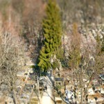 panorama-krzaki-tiltshift
